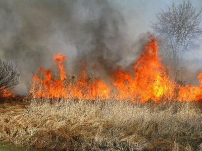 Wypalanie traw brutalne niszczenie środowiska