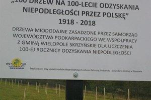 100 drzew na 100-lecie odzyskania Niepodległości - 20180510_0010.jpg