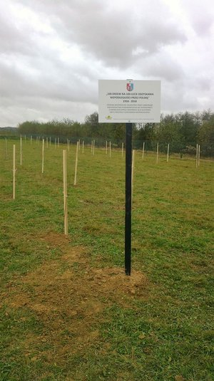 100 drzew na  100-lecie odzyskania niepodległości przez Polskę